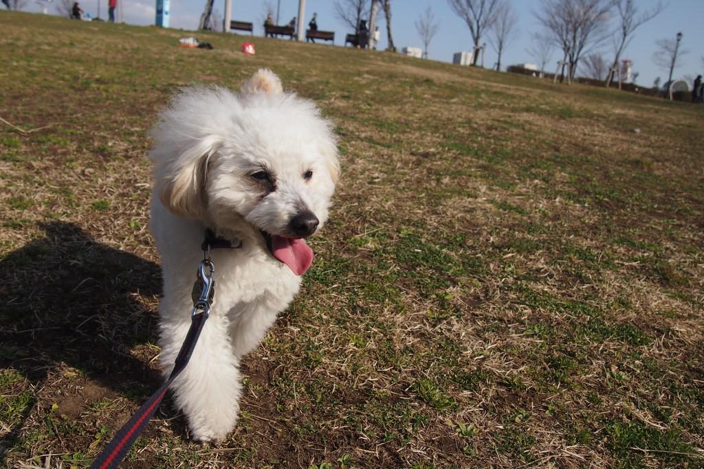 公園散歩 2015 02 15