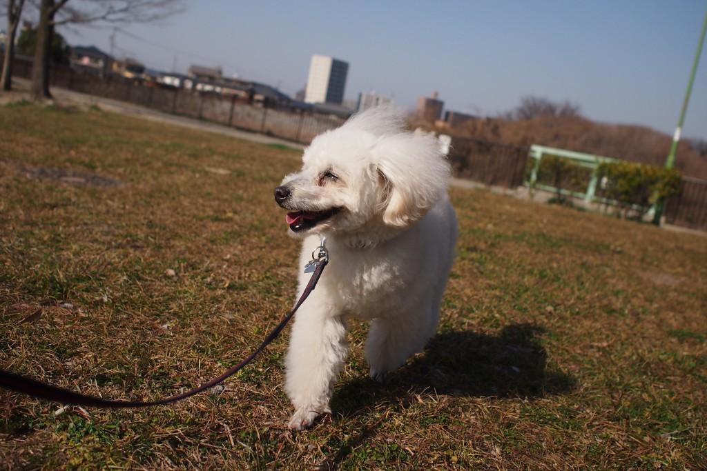 公園散歩 2016 03 04