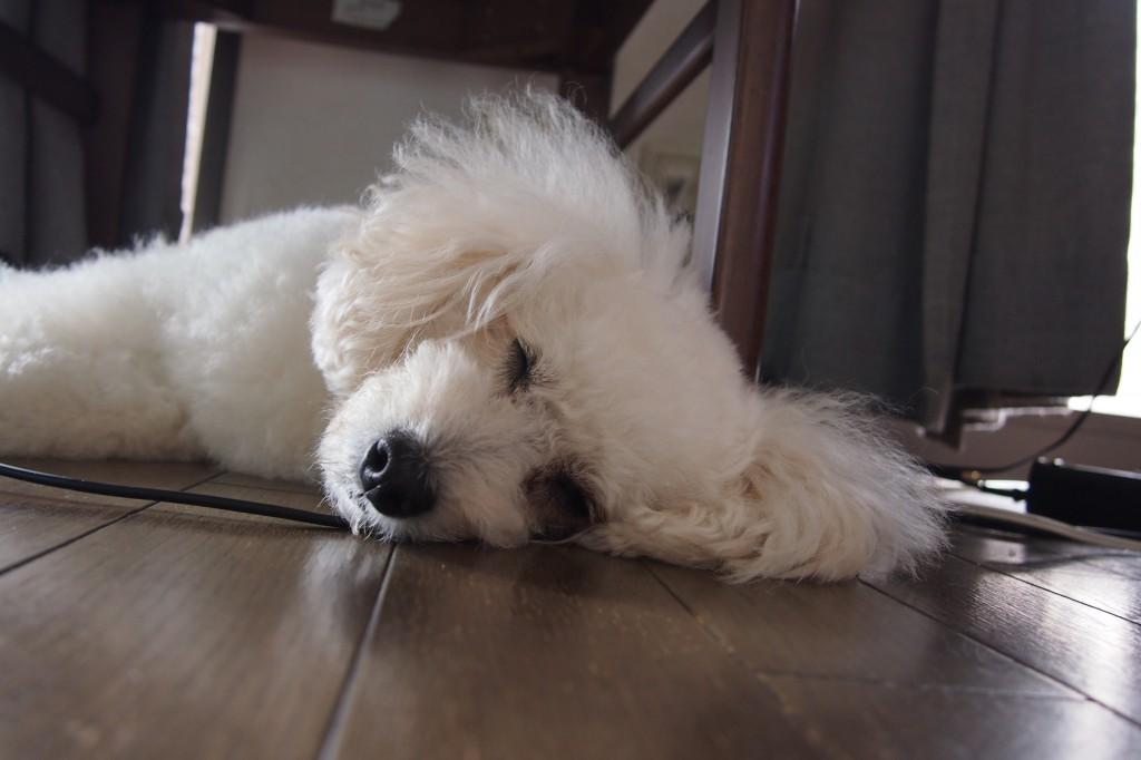 眠るフォーさん