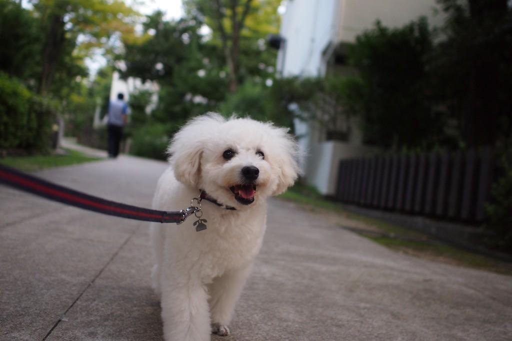 近所散歩 2015 09 15