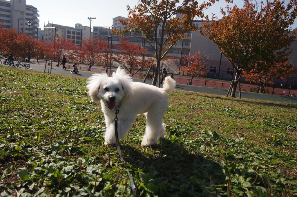 公園散歩 2014 11 22