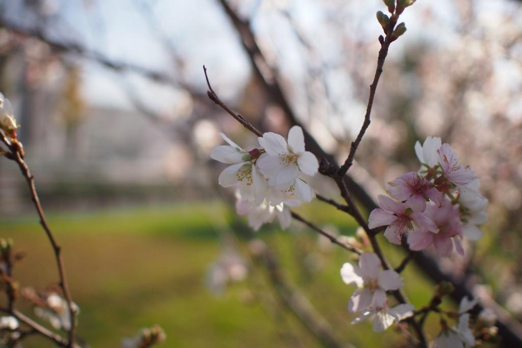 川名公園 2015 12 02