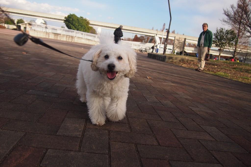 公園散歩 2014 12 13